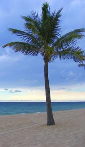 free palm tree